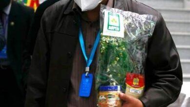 Photo of El jengibre, eucalipto, la wirawira y otras medicinas tradicionales llegan a casa grande del pueblo