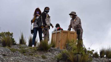 Photo of El Ministerio de Medio Ambiente realiza la liberación de dos cóndores andinos a su hábitat natural en el municipio de palca